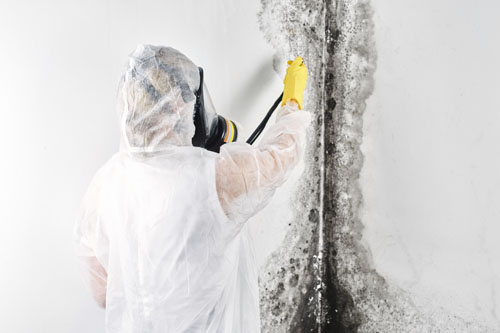 harbour city environmental services - mould remediation / removal